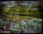 A picture shot with a Holga camera.