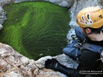 Eric looks at a pool coated in an intricate design of algae.