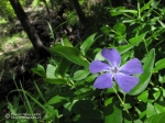 A wild flower.