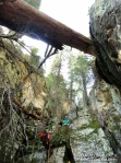 Eric on rappel as a huge downed tree spans the width of the canyon.