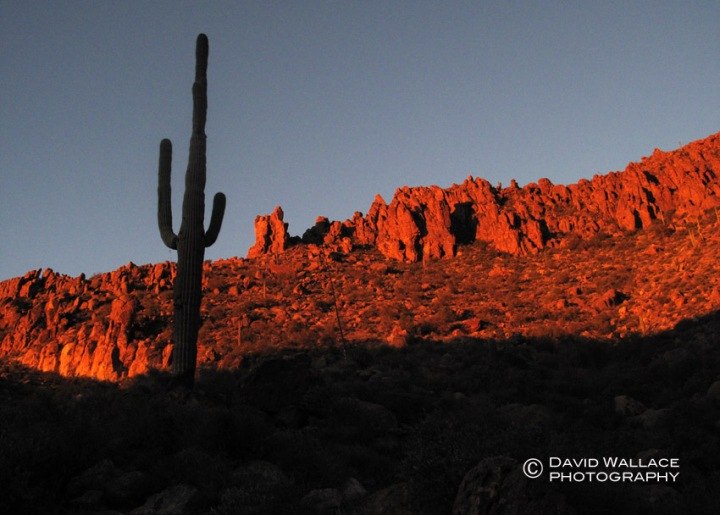 The sun hits the side of the mountain behind a Saguaro.