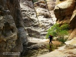 Eric moves through a gorgeous section of canyon. Looks like some good rock climbing potential here.