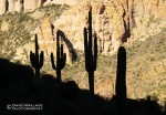 A line of saguaros is silhouetted against the other side of the walls of Canyon Lake.
