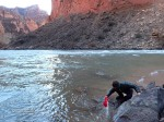 Eric gets water out of the Colorado River at camp in the bottom of the Grand Canyon.