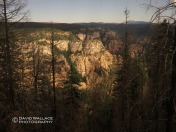 Looking down into the West Fork of Oak Creek Canyon through burned trees from the 2014 Slide Fire.