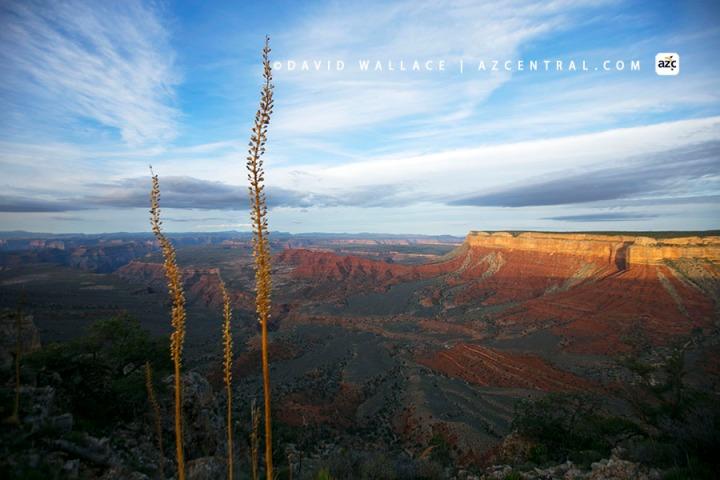Rim Grand Canyon